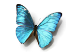 Butterfly_Transformation